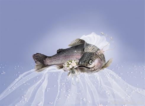 (مراسم انتخاب زیباترین عروس سال)/www.rahafun.com