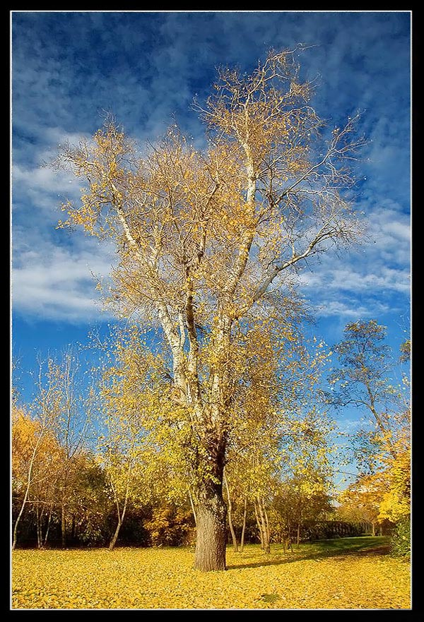 عکس های دیدنی از فصل پاییز|www.rahafun.com