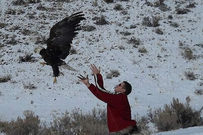زنده ماندن عجیب یک عقاب پس از تصادف با کامیون