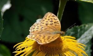 عکس های پروانه|www.rahafun.com|