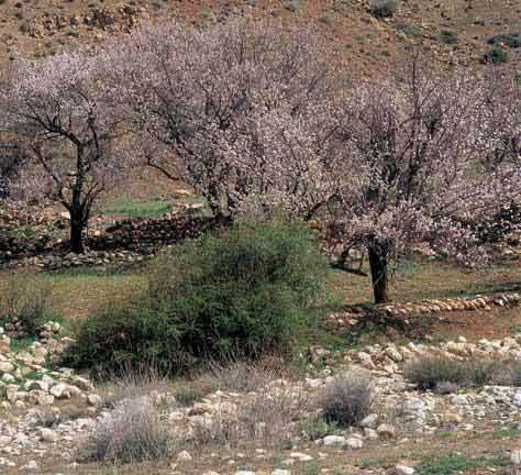 معرفی شهرستان های استان گلستان/www.rahafun.com
