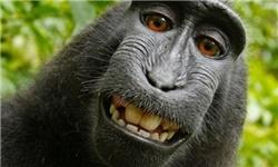 عکسی سلفی میمون بازیگوش از خودش گرفت دنیای مجازی را به هم ریخت