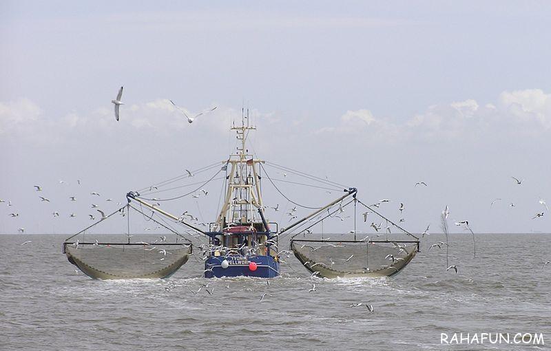 ماجرای ماهیگیری چینی ها در خلیج فارس چیست ؟