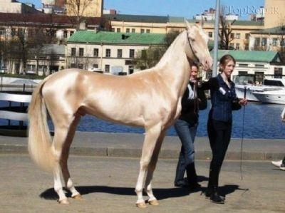 عکسهای زیباترین اسب جهان در کتاب گینس|www.eydoone.com