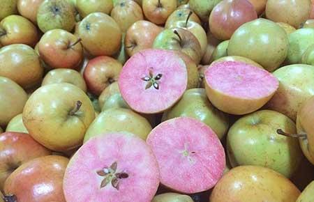 رونمایی سیب های عجیب و جالب با نام سوپرایز