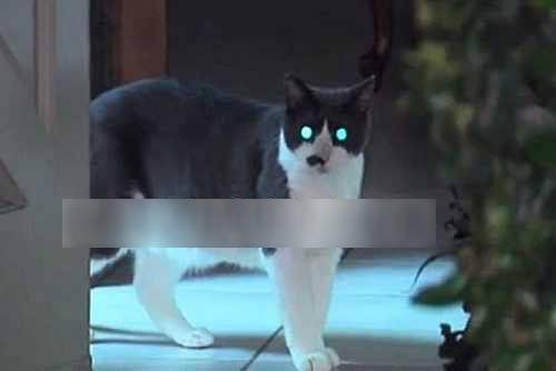شیطانی شدن گربه و حمله به زن در حمام