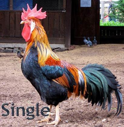 عکس مرد مجرد و خوشگل و لخت