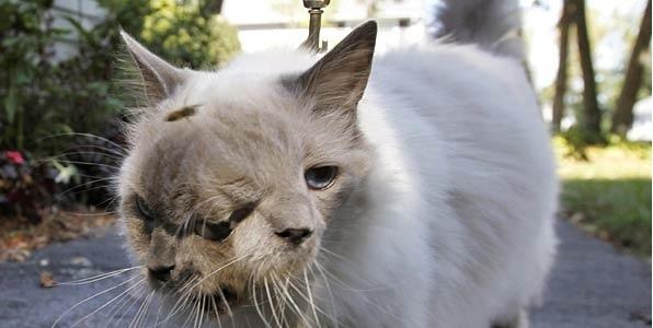 عجیب ترین گربه جهان با 3 چشم و 2 دهان|www.rahafun.com|