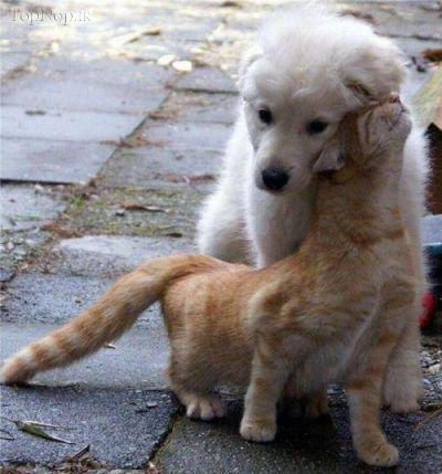 عکس حیوانات ملوس