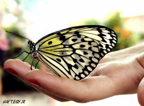 Butterfly-in-hand0_
