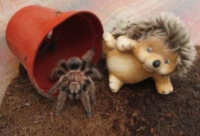 عکس کلکسیون عنکبوت ها
