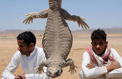 عکس های خوردن مارمولک در عربستان