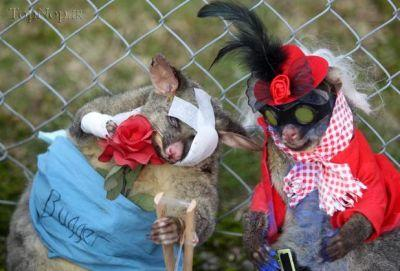پوشاندن لباس های بامزه به حیوانات