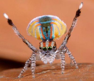 GmFI6EhHOY عکس خوشگل ترین عنکبوت جهان