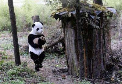 عکس های جالب نجات بچه پاندا
