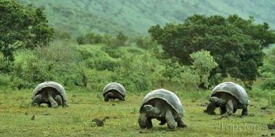 عکس بزرگترین لاک پشت های دنیا