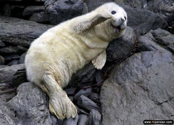 عکس های خنده دار و جالب,عکسهای خنده دار حیوانات