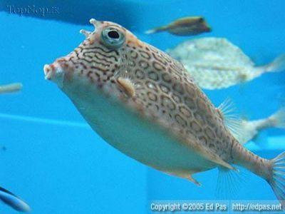 گالری عکس ماهی های کمیاب دنیا
