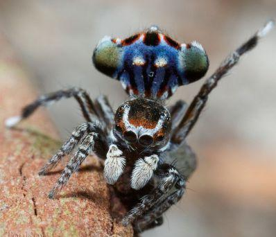 W6jndLCE1M عکس خوشگل ترین عنکبوت جهان