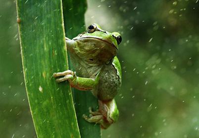 عکس های باکیفیت از حیوانات