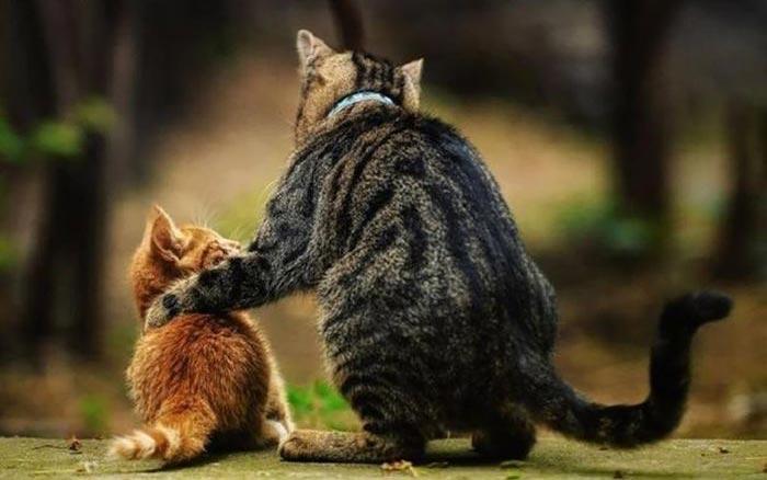 تصاویر جالب حیوانات