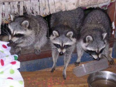 گلچین عکس حیوانات