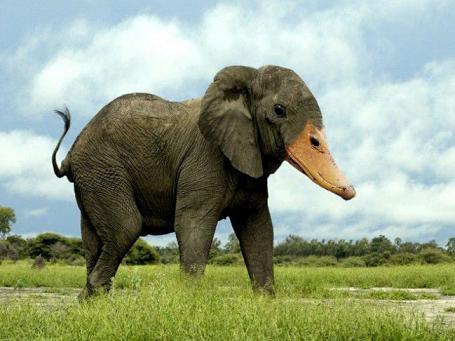 عکس های عجیب فتوشاپی  حیوانات