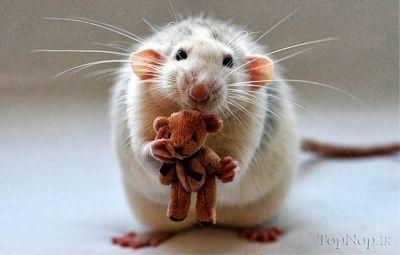 عکس حیوانات ناز و ملوس