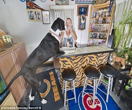 عکس بزرگترین سگ ماده جهان