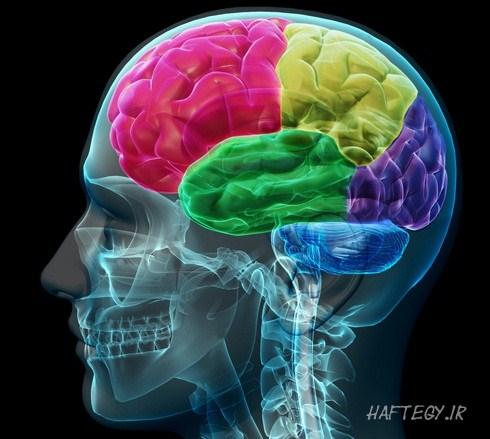 brain_rect_