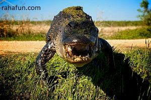 خطرناک ترین حیوانات جهان/www.rahafun.com