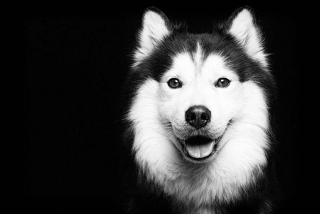 عکس سگ های بازیگوش