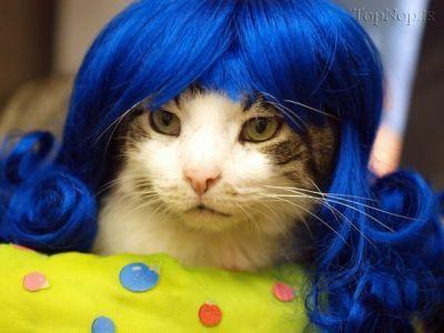 عکس گربه های خوشگل