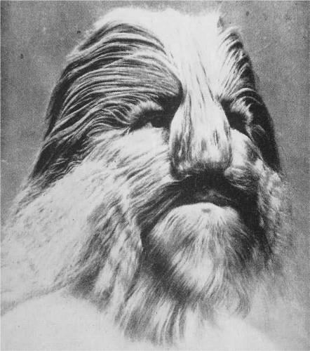 انسان های عجیب پرورش یافته توسط حیوانات/www.rahafun.com