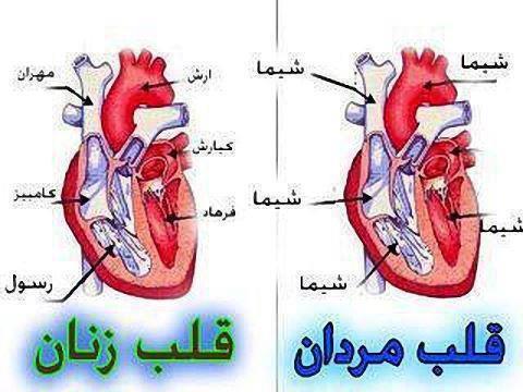مقایسه قلب زنان و مردان
