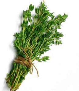 فواید و خواص داروی گیاهی آویشن برای بدن
