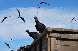 جانوران چرا و چگونه برای خود قلمرو تعیین میکنند؟