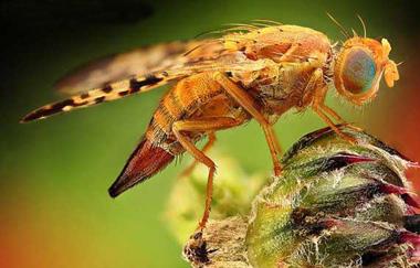 رازهای شگفت انگیز زندگی حشرات چیست؟