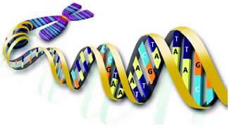 طریقه همانند سازی DNA در بدن انسان چیست ؟