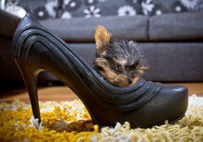 عکس های کوچیک ترین سگ جهان