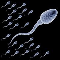 7 روش برای افزایش تعداد اسپرم ها