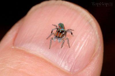 jvz4v9sED4 عکس خوشگل ترین عنکبوت جهان
