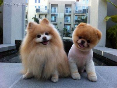 معروف ترین سگ دنیا