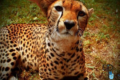 pic animals 1 عکس های زیبا از حیوانات