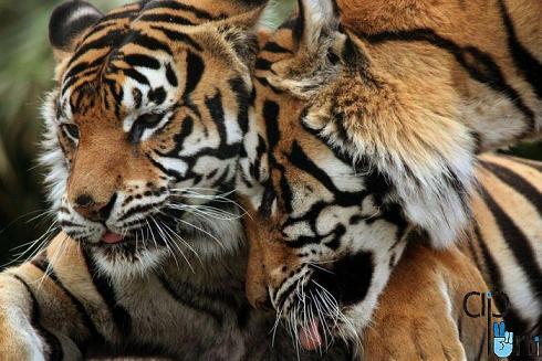 pic animals 10 عکس های زیبا از حیوانات