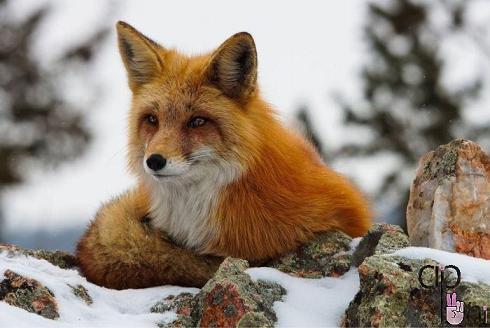 pic animals 4 عکس های زیبا از حیوانات