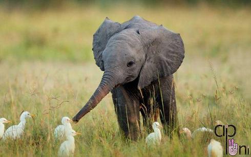 pic animals 7 عکس های زیبا از حیوانات