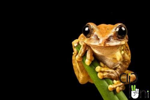 pic animals عکس های زیبا از حیوانات