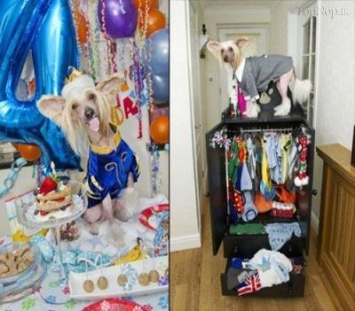 خوشبخت ترین سگ جهان
