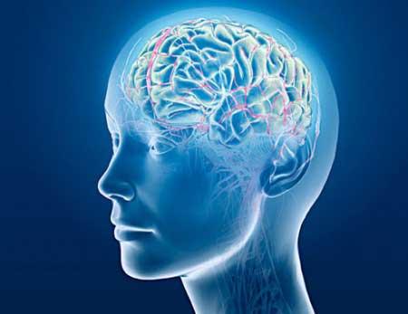 مواد غذایی مقوی برای تقویت حافظه در امتحانات